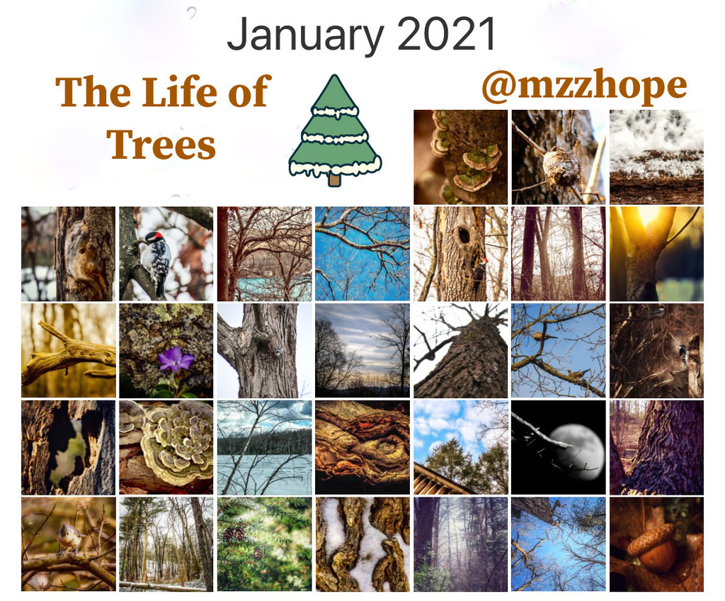 The Life of Trees Month by mzzhope