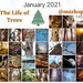 The Life of Trees Month