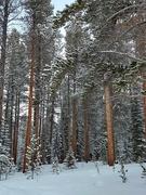 31st Jan 2021 - Fresh Snowfall