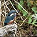A reminder of my kingfisher days by rosiekind