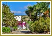 1st Feb 2021 - The Garden,Toplou Monastery,Crete (filler)