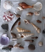 1st Feb 2021 - Seashells,  small feather and stones.