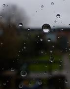 30th Jan 2021 - dull rainy day