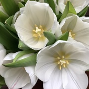 1st Feb 2021 - Tulips