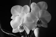 1st Feb 2021 - Bloom #4