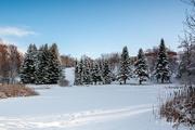1st Feb 2021 - Winter wonderland