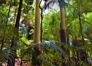 2nd Feb 2021 -  Tall Trees In The Aussie Bush ~