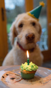 1st Feb 2021 - Happy Birthday George!