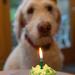 Happy Birthday George!  by jantan