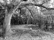 1st Feb 2021 - Tangled Woods