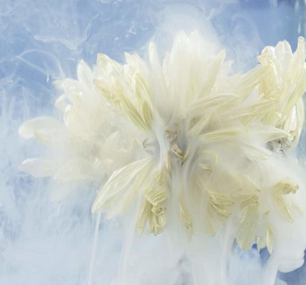 flower by winshez