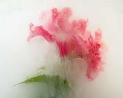 3rd Feb 2021 - Flower 2