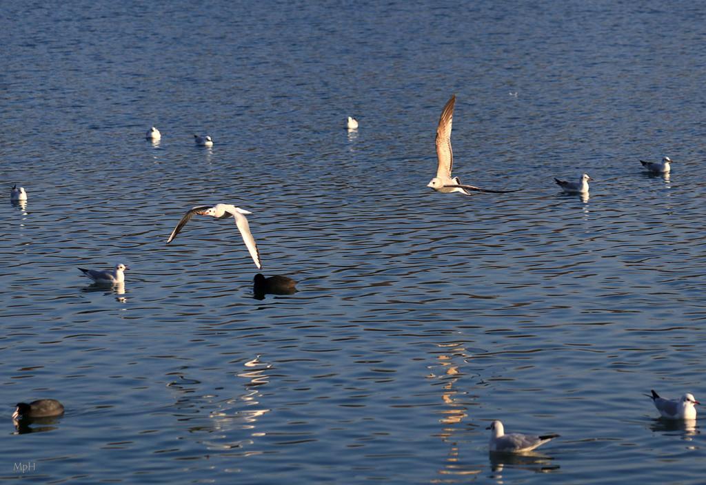 Life on a lake by cherrymartina