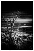 2nd Feb 2021 - Lone tree watches