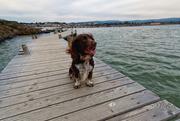2nd Feb 2021 - Walking on water