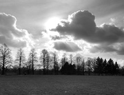 2nd Feb 2021 - For2021 Trees and clouds