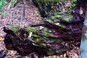 3rd Feb 2021 -       Nature's Sculpture ~