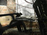 2nd Feb 2021 - Squirrel Sitting in Backyard