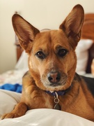 1st Feb 2021 - Comfort Pup