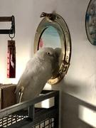 2nd Feb 2021 - Pretty Bird!