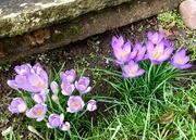 1st Feb 2021 - Soon be Spring..
