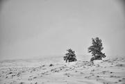 3rd Feb 2021 - Two Lone Trees
