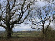 3rd Feb 2021 - Looking towards Dovedale