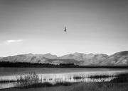 3rd Feb 2021 - Chopper fly over