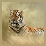 3rd Feb 2021 - Tiger