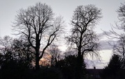 2nd Feb 2021 - Tree silhouettes