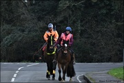 3rd Feb 2021 - It's always nice to see horses in the village