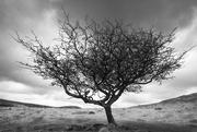 3rd Feb 2021 - Dartmoor
