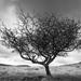 Dartmoor by rumpelstiltskin