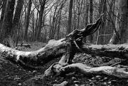 3rd Feb 2021 - Walking in the Woods
