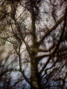 3rd Feb 2021 - swirly tree