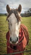 3rd Feb 2021 - horse