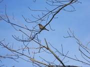 3rd Feb 2021 - Bird on Branch