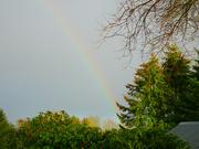 4th Feb 2021 - rainbow