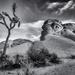 Joshua Tree National Park by cdcook48