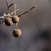 Seed Balls by lsquared