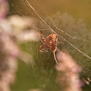 3rd Feb 2021 - Spider with web