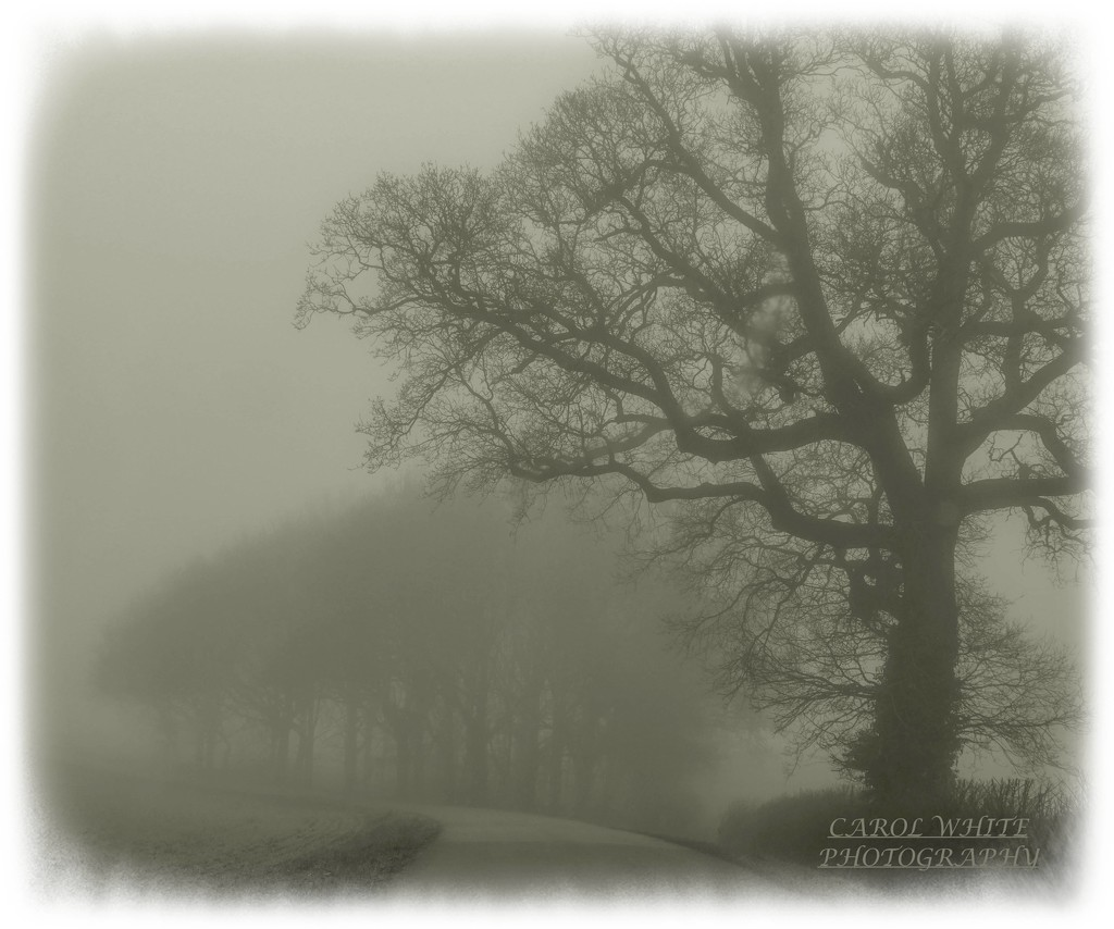 Ghostly Trees by carolmw