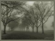 4th Feb 2021 - Foggy Morning