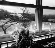4th Feb 2021 - Through The Farm Window