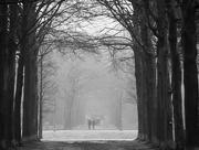 4th Feb 2021 - Misty morning