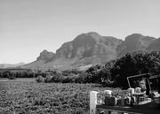 4th Feb 2021 - Across the vineyard