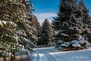 4th Feb 2021 - Ringve Botanical Garden in winter
