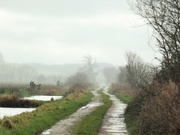 4th Feb 2021 - Rain and more rain...