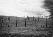 4th Feb 2021 - Fence Henge