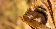4th Feb 2021 - Squirrel on the Sawed Off Palm Frond!